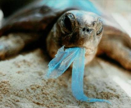Urgentie is groot om de oceanen plastic vrij te krijgen.